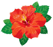 Hibiscus without gradients. Hibiscus flower vector illustration. Without gradients, great for printing and easy to handle for all purposes royalty free illustration