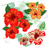 Hibiscus Handdrawn. Several hibiscul in handrawn style Stock Photo