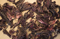 hibiscus herbal tea dried petals Stock Photography