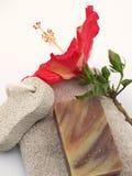Hibiscus lateral Fotografia de Stock