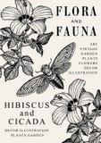 Hibiscus, mallow Cicada έντομα, ρεαλιστικά απομονωμένα λουλούδια κήπων φύσης Στοκ Φωτογραφίες