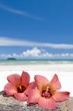 Hibiscus op strand stock foto
