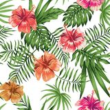 Hibiscus orange red purple seamless white background pattern Stock Images