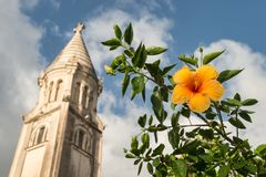 Hibiscus Oranje Bloem Royalty-vrije Stock Afbeelding