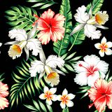 Hibiscus and orchids tropical seamless background Stock Photos