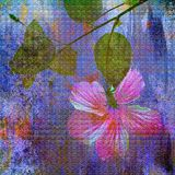 Hibiscus painting Stock Images