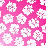 Hibiscus Pattern - Pink Stock Photography