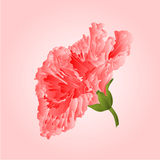 Hibiscus pink tropical flowers vector Stock Photos