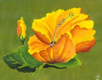 Hibiscus pintado Foto de Stock