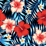 Hibiscus red and palm leaves blue seamless background Royalty Free Stock Images