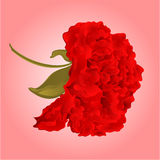 Hibiscus red vector Stock Photography