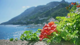 Hibiscus Rose at the Amalfi Coast in Italy
