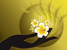 hibiscus s χεριών του Βούδα λευκ Στοκ Εικόνα