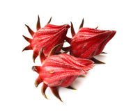 Hibiscus sabdariffa or roselle fruits. Stock Photography