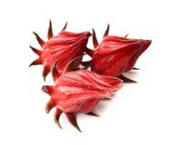 Hibiscus sabdariffa or roselle fruits. Stock Photography