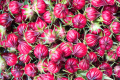 Hibiscus sabdariffa or roselle fruits. Roselle fruit Stock Images