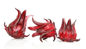 Hibiscus sabdariffa or roselle fruits Royalty Free Stock Photos
