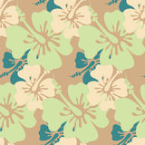Hibiscus seamless background Stock Images