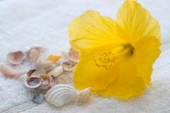 Hibiscus and seashells Stock Photography