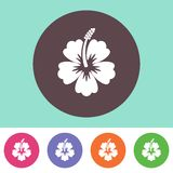 Hibiscus silhouette icon Stock Image