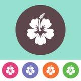 Hibiscus silhouette icon Stock Image