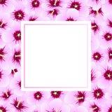 Hibiscus syriacus - Rose von Sharon Banner Card Border Auch im corel abgehobenen Betrag Stockfotos
