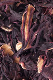 Hibiscus tea close up Stock Photography