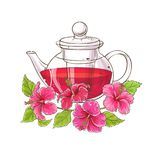 Hibiscus tea illustration Royalty Free Stock Images