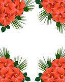 Hibiscus tropical Flowers border Royalty Free Stock Images