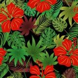 Hibiscus, tropische bladeren Stock Fotografie