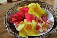 Hibiscus und tropische Blumen Stockfoto
