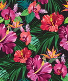 Hibiscus vector pattern Royalty Free Stock Photo