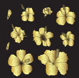 Hibiscus vector set isolate on black background. Gold flower vector set on black background,hibiscus vector Gold Royalty Free Stock Photos
