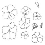 Hibiscus vector set isolate on white background. Black and white Hibiscus vector set isolate on white background Stock Photography