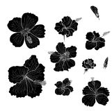Hibiscus vector set isolate on white background. Black and white Hibiscus vector set isolate on white background Royalty Free Stock Photo