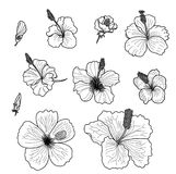 Hibiscus vector set isolate on white background. Black and white Hibiscus vector set isolate on white background Royalty Free Stock Photos