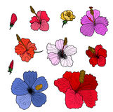 Hibiscus vector set isolate on white background. Colourful Hibiscus vector set isolate on white background Stock Photography