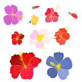 Hibiscus vector set isolate on white background. Colourful Hibiscus vector set isolate on white background Royalty Free Stock Images