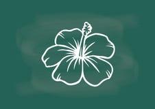 Hibiscus, vector van hibiscusbloem die op bordkrijt trekken Stock Foto's