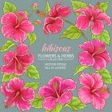 Hibiscus vectorkader royalty-vrije illustratie