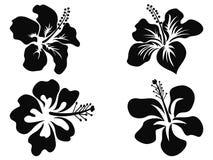 Hibiscus vectorsilhouetten Stock Foto