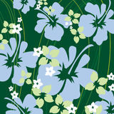 Hibiscus verde Fotos de Stock