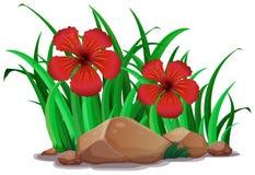 Hibiscus vermelho no arbusto ilustração do vetor