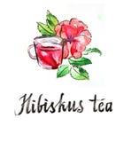 Hibiscus Watercolor τσάι απεικόνιση αποθεμάτων