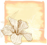 Hibiscus  watercolor flower Stock Photos
