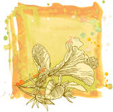 Hibiscus & watercolor frame Stock Photo