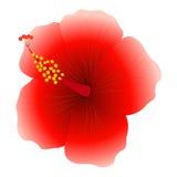 Hibiscus. Stock Image