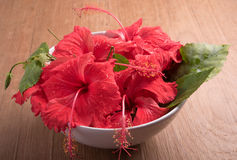 Hibiscus  on wooden background. Hibiscus  on the wooden background Royalty Free Stock Image