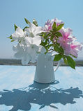 Hibiscus on wooden table, background of blue sky. Hibiscus bouquet on wooden table background of blue sky  Rose Mallow, Shoe Flower, Roselle, China Rose Royalty Free Stock Photos