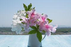 Hibiscus on wooden table, background of blue sky Stock Photos